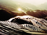 One day Longji rice terrace tour