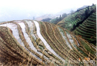 Dragon's Backbone Terraces